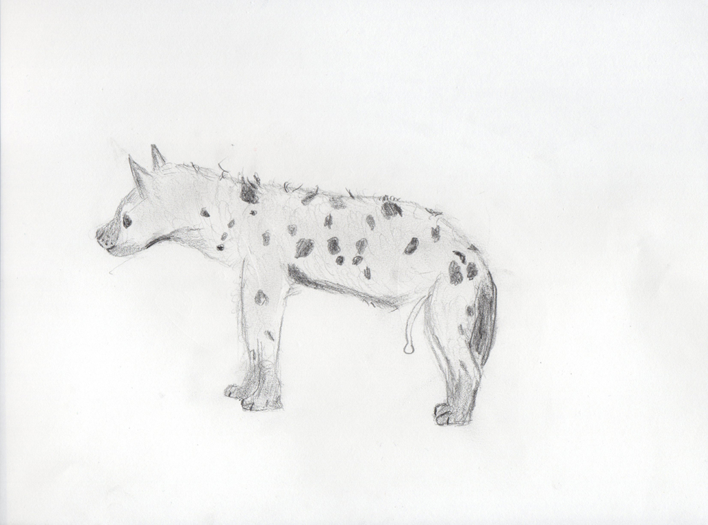 Female Spotted Hyena (Pencil sketch on paper, 29.7x21cm), 2019