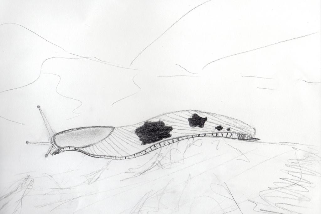 Banana Slug (Pencil sketch on paper, 29.7x21cm), 2019